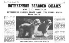 Les Bearded Collies de Martine et Pierre Gsell