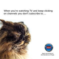 #grumpycat, #TVsubscription, #watchingTV, #firstworldproblems Tv Funny, First World Problems, Grumpy Cat, Life, Grumpy Cats, Grumpy Car, Grump Cat