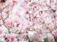 magnolia-by-Sonya-Khegay-02