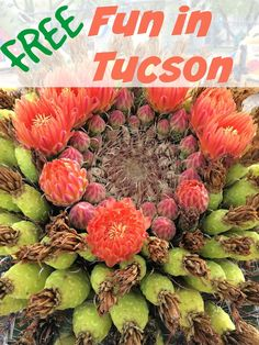 6 Fun, Family-Friendly and Free Things To Do in Tucson Arizona - Traveling Mom