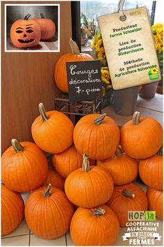 Strasbourg, Pumpkin, Vegetables, Food, Gourd, Pumpkins, Essen, Vegetable Recipes, Meals