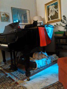 Multitasking piano...
