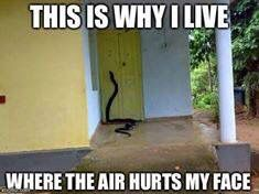This is why I live where the air hurts my face.  Huge snake.