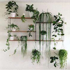 Great shelf setup! 😍🌿 Phot