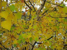 Стихи друга: Про Осень и листья.....