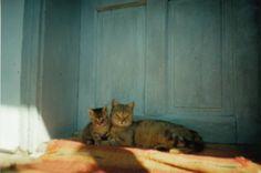 Pisica Misha și puiul ei