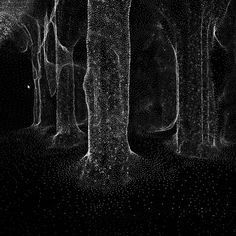 Enter A Digitized Forest In This New Audiovisual Installation | The Creators Project