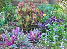 Side garden with tropicals looks good no matter how hot it gets.