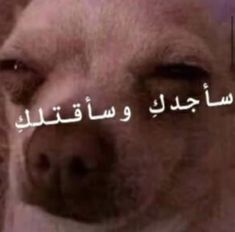Arabic Memes, Arabic Funny, Funny Arabic Quotes, Funny Picture Jokes, Funny Reaction Pictures, Funny Pictures, Funny Study Quotes, Movie Quotes, Funny Science Jokes
