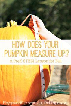 How Does Your Pumpkin Measure Up? Fun pumpkin STEM activity for preschool or kindergarten.