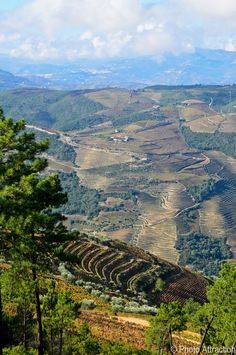 Douro Valley - Portugal. First demarcated wine region in the world, UNESCO World Heritage Site.