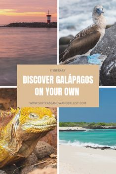 How to explore the Galápagos Islands on your own? With this Galápagos itinerary, I show you some fantastic places and day trips for an unforgettable holiday. Ecuador, Ocean Photography, Photography Tips, Portrait Photography, Wedding Photography, Galapagos Islands, South America Travel, Central America, Amazing Nature