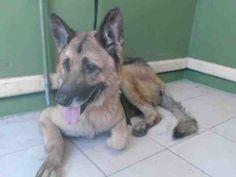 www.PetHarbor.com pet:LACO1.A4867094