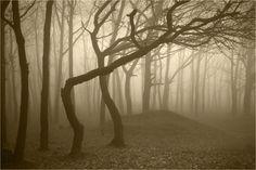 Así es el Bosque Hoia Baciu: el Triángulo de las Bermudas de Rumania   Comer, Viajar, Amar