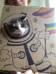 Des chats, des cartons et de l'art