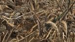Great hunting tips. Cool camo products. Stuff hunters need to know.