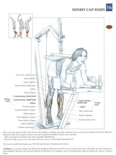 Donkey Calf Raises ~ Repinned by Crossed Irons Fitness