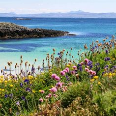 Beautiful wild flowers on the Isle of Coll, Hebrides, Scotland Thanks for sharing Places In Scotland, Scotland Travel, As Roma, Isle Of Harris, Paisley Scotland, Cairngorms, Scottish Islands, White Sand Beach, Nature Photography
