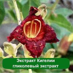 Экстракт этого растения, поможет сделать ваш бюст и шею более подтянутыми. Он убирает воспаление, действует как лифтинг.  https://xn----utbcjbgv0e.com.ua/jekstrakt-kigelii-10-gramm.html #мыло_опт  #сладкие_отдушки #свежесть  #эфирные_масла #отдушки #парфюмерия #массаж #духи #сладкие_отдушки  #своими_руками #запахи #ароматы #смеси #мыло #домашнее_мыло #ручнаяработа #мыловарение#мыловар #мыловары #мылоизосновы…
