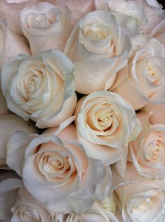 Vendela Roses..I want to use Valentin a instead it's a double center but a similar color Ivory Roses, Cream Roses, Beautiful Roses, White Flowers, Beautiful Flowers, Blush Wedding Flowers, Rose Wedding Bouquet, Vases, Naturaleza