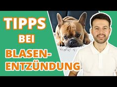 So erkennst du eine Blasenentzündung beim Hund   TIPPs zur Vorbeugung - YouTube French Bulldog, Dogs, Youtube, Animals, Dog Owners, Vet Office, Further Education, Health And Fitness, Cats