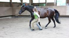 Freiarbeit, Pferdeverstehen