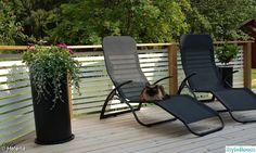 trädäck,räcke,solstol,altan,katt