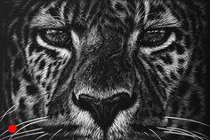 Richard Symonds Artist black and white wildlife drawings