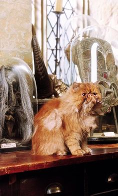 What iconic Hogwarts sanctioned pet will you bring with you at the start of next semester?