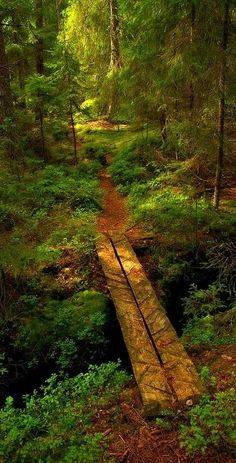 Sometimes being bored leads to the path forward.... Forest Bridge, Sweden