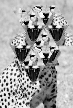 #photography #Cheetah Collages, Collage Art, Graphic Art, Graphic Design, Dope Wallpapers, Design Graphique, Photo Manipulation, Oeuvre D'art, Design Art