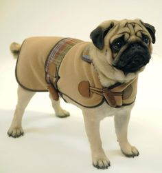 Mulberry's Autumn/Winter 2009 collection modeled by Hogey from Battersea Dogs & Cats Home in London.