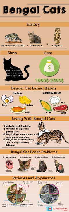 Bengal Cats – Top 10 Facts Every Cat Lover Must Know