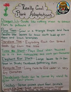 Plant Adaptations Anchor Chart from The Pensive Sloth for Grade STAAR Life Science Fourth Grade Science, Middle School Science, Elementary Science, Science Classroom, Science Education, Teaching Science, Science Activities, Science Experiments, Forensic Science
