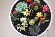 Little cactus garden