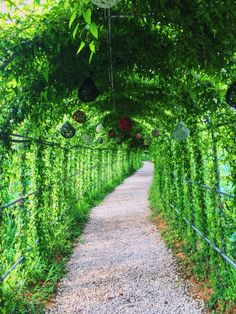 Plant Tunnel in Buyeo, Korea / Aug 2, 2015