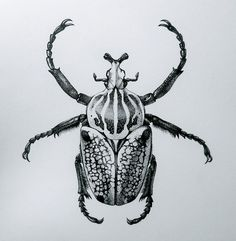 Mary P Williams: Illustration & Paleo Art: Goliath beetle