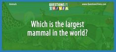Animal Trivia Questions – Which is the largest mammal in the world? Trivia Questions For Kids, Quizzes For Kids, Trivia Games, Mammals, World, The World