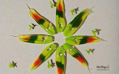 LAS COLECCIONES DE MI VIDA: Dibujos en Plumas
