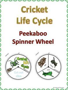 Cricket Life Cycle $