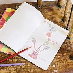 Keep a Plant Journal: Have kids record each plant's start date, then add sketches, measurements, and notes as the days go on.