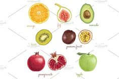 2996371 watercolor papaya fruit color illustration hand background water drawn white vector isolated nature food art fresh paint freshness diet vegetarian tropical logo set symbol leaf painting juicy fruits exotic healthy mango orange raw variety grapes green view organic closeup top ripe dragon vegetables strawberry apple delicious colorful kiwi lemon peach autumn collection design dragon fruit drawing harvest health ingredient melon natural nutrition passionfruit red seed sketch slice…