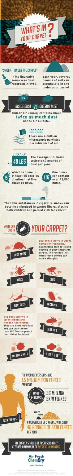 What Is Living In Your Carpet? Clean Carpets With Air Fresh Chem-Dry