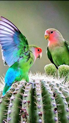 All Birds, Cute Birds, Pretty Birds, Beautiful Birds, Animals Beautiful, List Of Animals, Animals And Pets, Cute Animals, Animal List