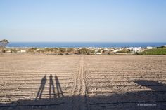 An afternoon at the Estate Argyros Sweet Wine, Santorini, Vineyard, Island, Beach, Water, Travel, Life, Outdoor