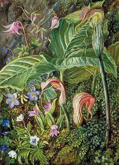 Kew: Marianne North Gallery: Painting 274: Himalayan Flowers embedded in Maidenhair Fern