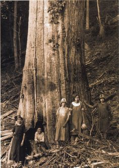 The Shelton Family next to a Castanea dentata in the Great Smoky Mountains National Park. The oldest, recently-documented, American Chestnut was a dead stem at least 270 yrs old
