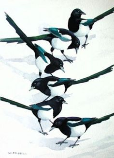 Magpie Patterns, watercolour, by Sid Frissell
