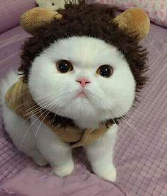 Beautiful Kittens, Animals Beautiful, Cute Animals, Baby Cats, Baby Kitty, Kitty Cats, Crazy Cat Lady, Cat Love, Friends In Love