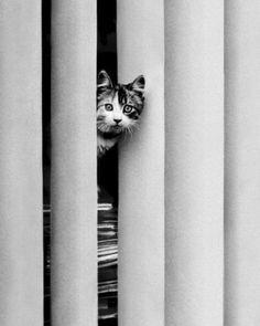 Chat Curieux by Edward Golbin